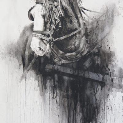 Barry McCann Dark horse