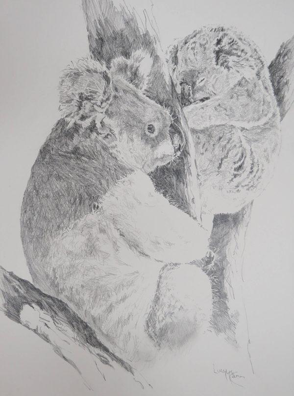 Lucy McCann Koala i