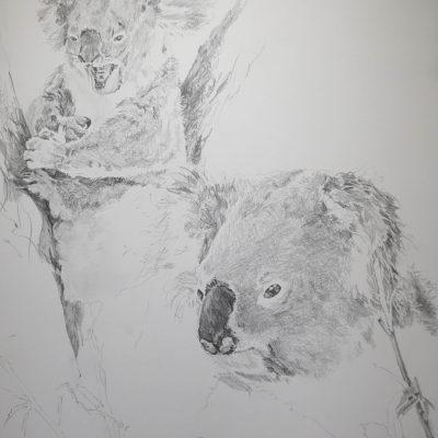 Lucy McCann Koala ii