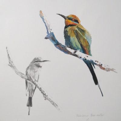 Lucy McCann Rainbow bee-eater